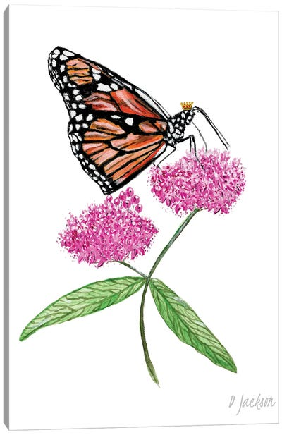 Monarch Butterfly On Pink Milkweed Flower Canvas Art Print