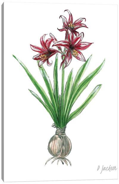 Red And White Botanical Amaryllis Canvas Art Print