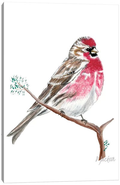 Red Sparrow, Common Redpoll Canvas Art Print