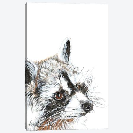 Curious Raccoon Canvas Print #DJA46} by Dawn Jackson Art Print