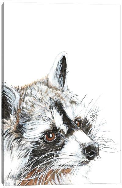 Curious Raccoon Canvas Art Print