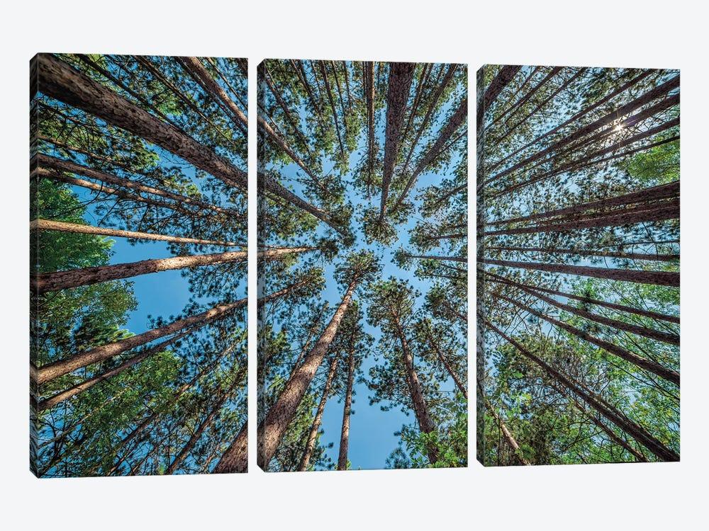 Up by Daniel J. Bellyk 3-piece Canvas Art Print