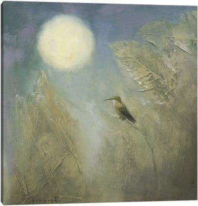 Hummingbird Dreaming Canvas Art Print