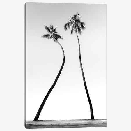 Double Palm Black And White Canvas Print #DKE10} by Daniel Keating Canvas Art