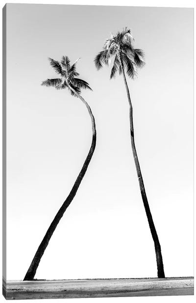 Double Palm Black And White Canvas Art Print
