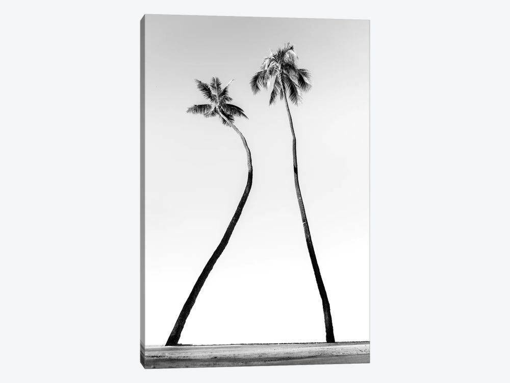 Double Palm Black And White by Daniel Keating 1-piece Canvas Art Print