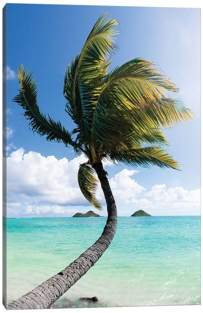 Palm I Canvas Art Print