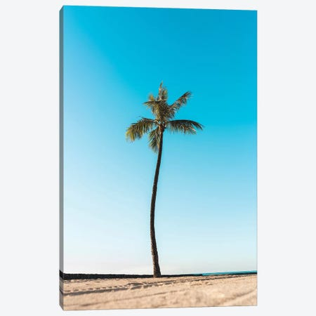 Palm Tree Canvas Print #DKE24} by Daniel Keating Canvas Art
