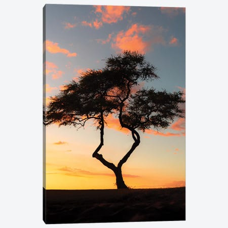 Treevibes Ii Canvas Print #DKE38} by Daniel Keating Canvas Wall Art