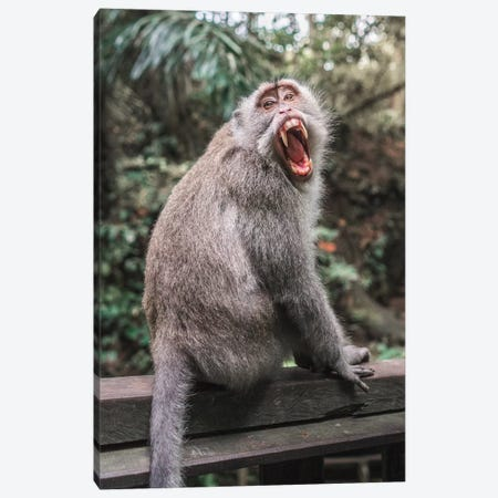 Bali Monkey Canvas Print #DKE43} by Daniel Keating Art Print