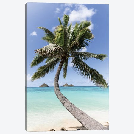 Paradise Palm Canvas Print #DKE46} by Daniel Keating Canvas Art