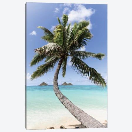 Paradise Palm Canvas Print #DKE46} by Daniel Keating Canvas Art