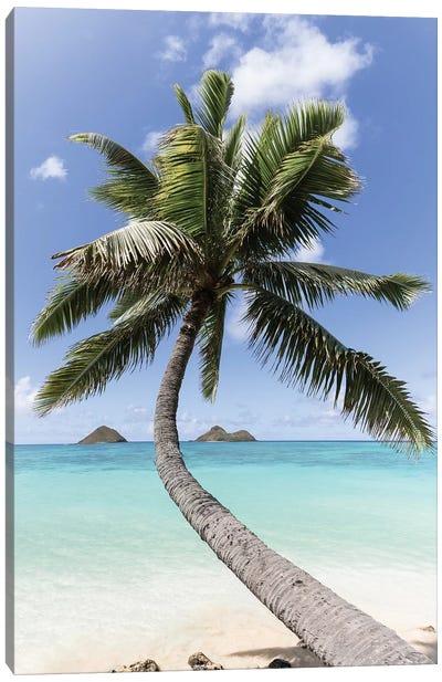 Paradise Palm Canvas Art Print