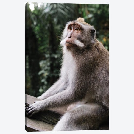 Mr. Monkey Canvas Print #DKE53} by Daniel Keating Canvas Art