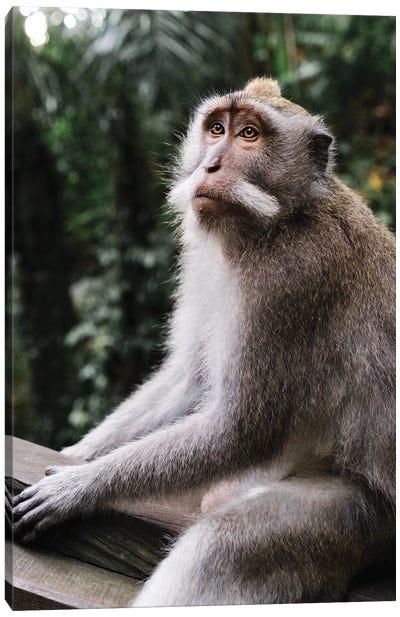 Mr. Monkey Canvas Art Print