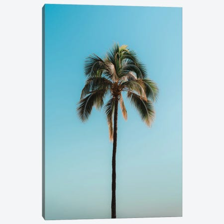 Pretty Palm Canvas Print #DKE61} by Daniel Keating Canvas Print