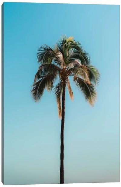 Pretty Palm Canvas Art Print