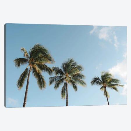 Three Palms Canvas Print #DKE72} by Daniel Keating Canvas Art