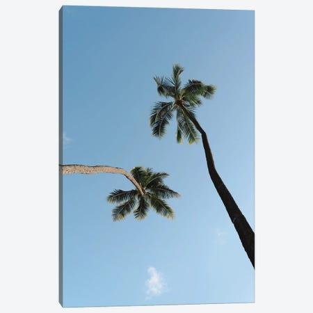 Twisted Palms Canvas Print #DKE74} by Daniel Keating Canvas Print