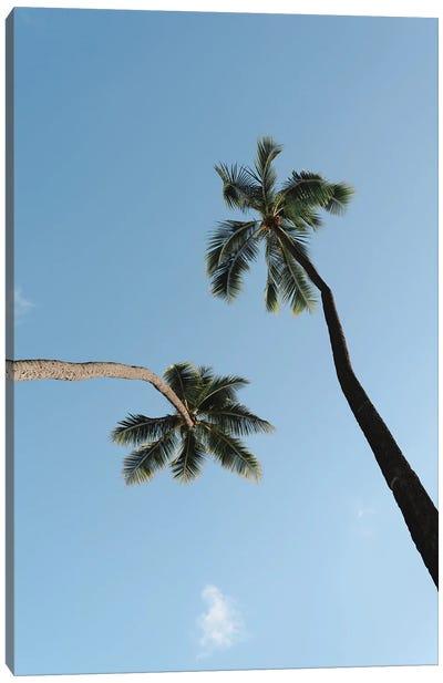 Twisted Palms Canvas Art Print