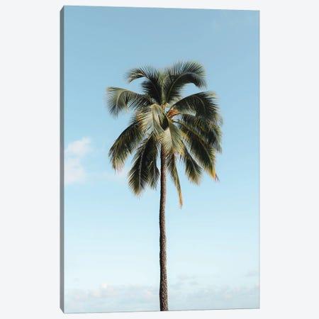 Simple Palm Canvas Print #DKE75} by Daniel Keating Canvas Art Print