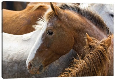 Horse Head Profile, Malaga, Chelan County, Washington, USA Canvas Art Print