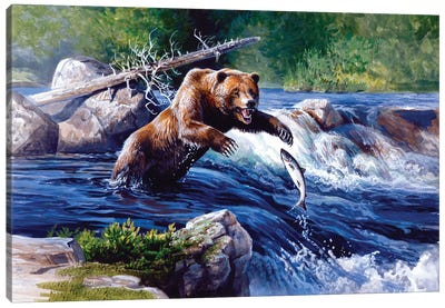 Grizzly Stream Canvas Art Print