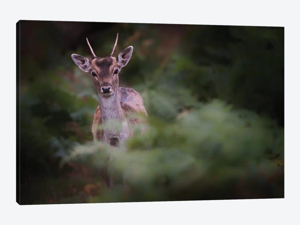 Young Fallow Deer by Karen Deakin 1-piece Art Print
