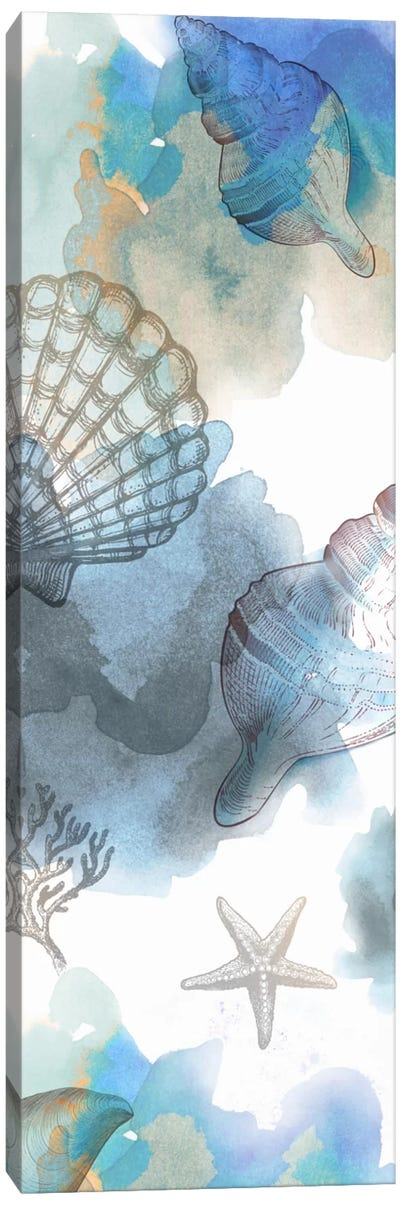 Shell Reflections I Canvas Art Print