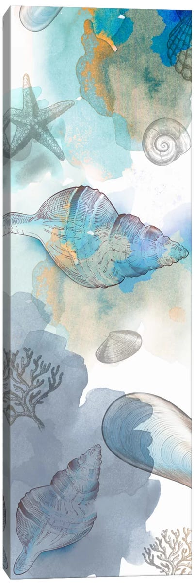 Shell Reflections II Canvas Art Print
