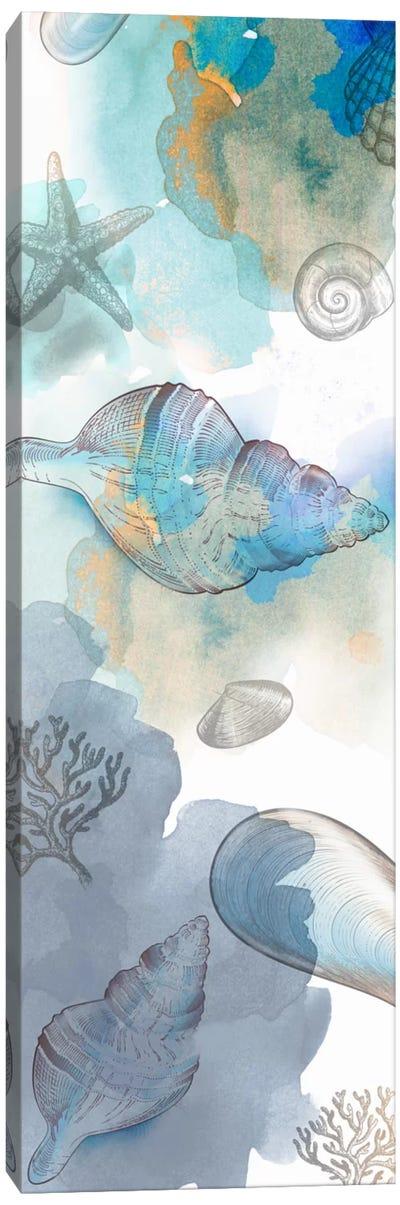Shell Reflections II Canvas Art Print