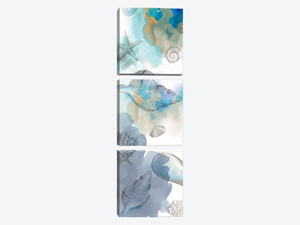 Shell Reflections II by Drako Fontaine 3-piece Canvas Wall Art
