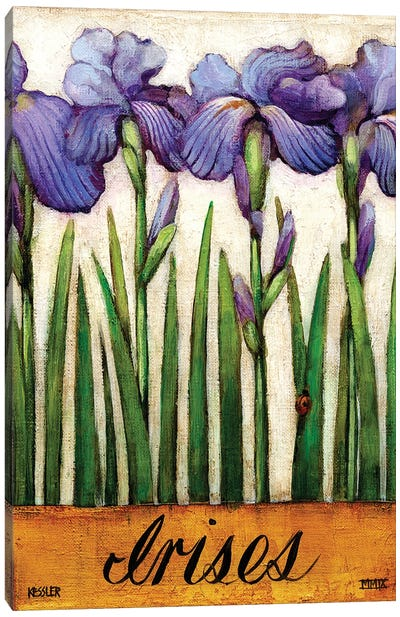 Irises Canvas Art Print