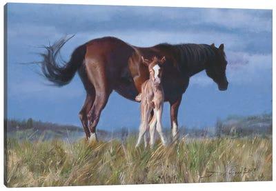 Born Yesterday Canvas Art Print