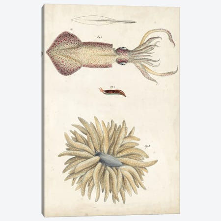 Ocean Curiosities I Canvas Print #DKY1} by DeKay Canvas Print