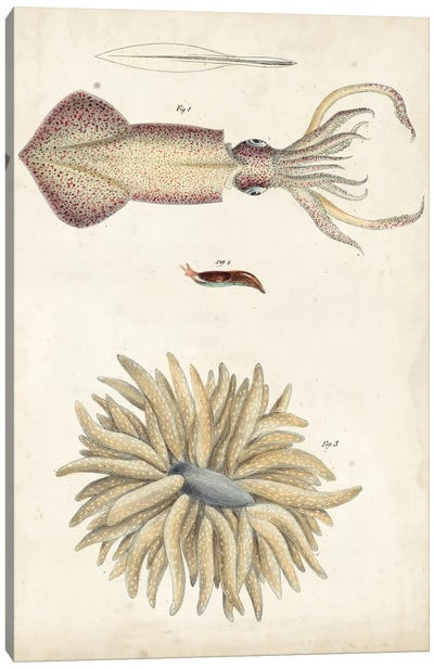 Ocean Curiosities I Canvas Art Print