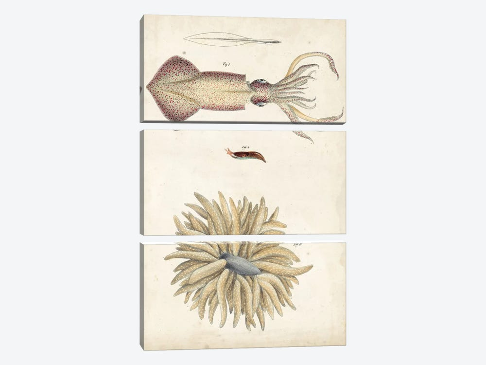 Ocean Curiosities I by DeKay 3-piece Canvas Wall Art