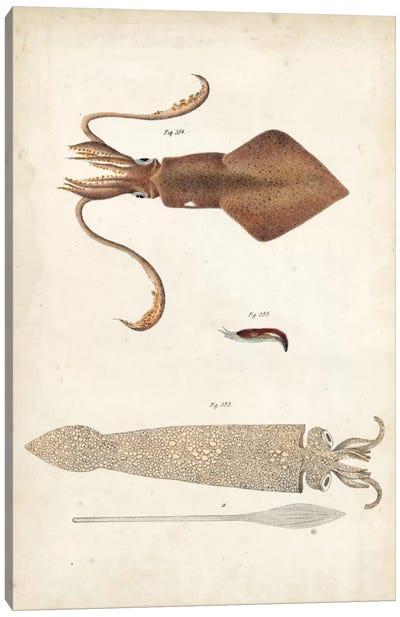 Ocean Curiosities II Canvas Art Print