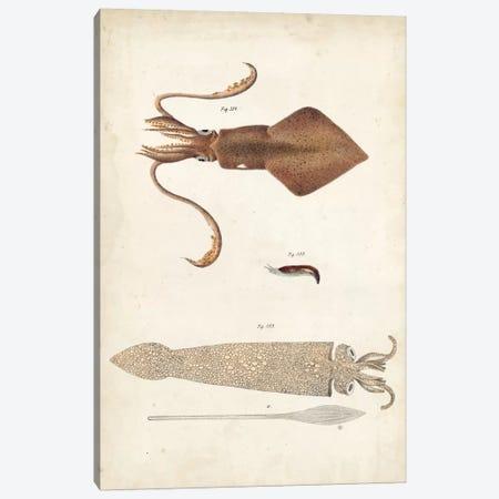 Ocean Curiosities II Canvas Print #DKY2} by DeKay Canvas Art Print