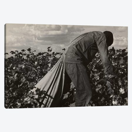 Cotton Field Stoop Laborer, San Joaquin Valley, California, USA Canvas Print #DLA1} by Dorothea Lange Canvas Print