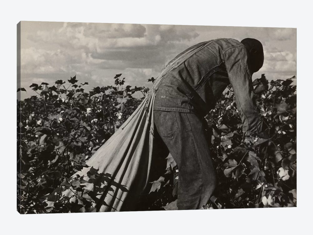 Cotton Field Stoop Laborer, San Joaquin Valley, California, USA by Dorothea Lange 1-piece Canvas Print