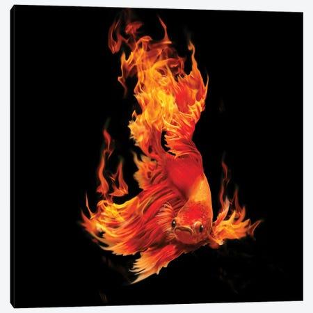 Fighting Fishon Fire Canvas Print #DLB70} by David Loblaw Canvas Wall Art