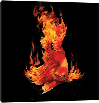 Fighting Fishon Fire Canvas Art Print