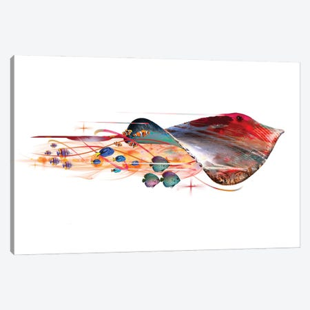 Colorful Stingray Canvas Print #DLB73} by David Loblaw Canvas Artwork