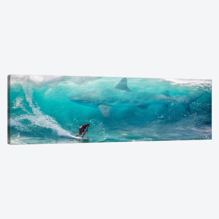 Shark Surfer Canvas Print #DLB79} by David Loblaw Canvas Artwork