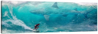 Shark Surfer Canvas Art Print