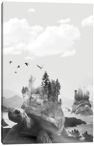 Turtle And The Trees Canvas Art Print