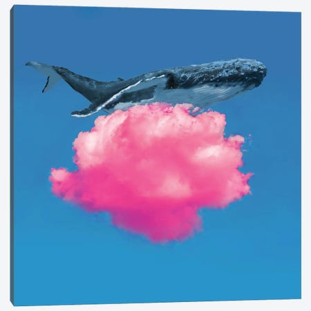 Whale Resting Canvas Print #DLB97} by David Loblaw Canvas Art Print