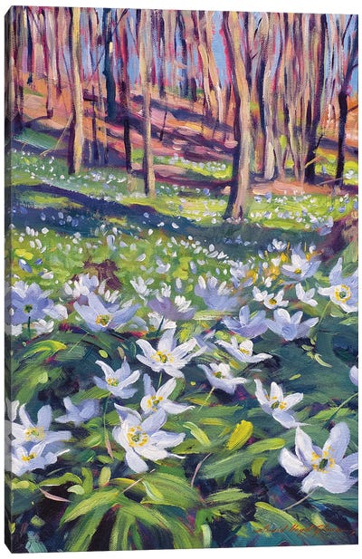 Anenomes In The Meadow Canvas Art Print