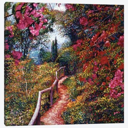 Tuscany Bougainvillea Trail Canvas Print #DLG54} by David Lloyd Glover Canvas Art